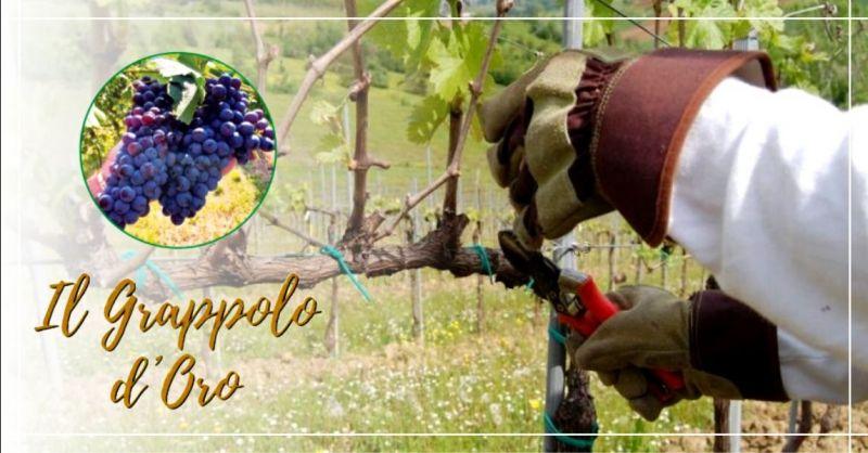 Offerta servizio di potatura viti il grappolo d'oro Vicenza